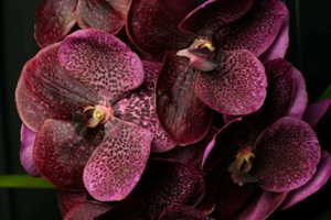 Summer Orchid Growing Tips