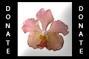 St. Augustine Orchid Society Facebook Group
