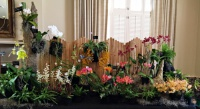 Orchid Society Show Exhibit